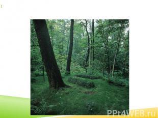 10 (23) листопада 1910 року письменника поховали в Ясній Поляні, скраю лісового