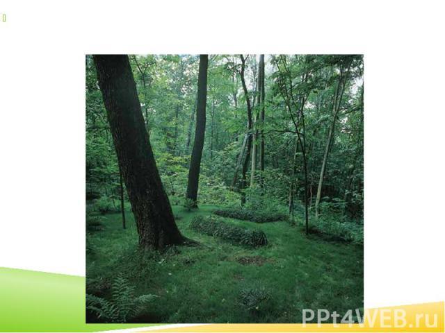 10 (23) листопада 1910 року письменника поховали в Ясній Поляні, скраю лісового яру, де в дитинстві він разом із братом шукав «зелену паличку», яка зберігала «секрет» ощасливлення всіх людей. 10 (23) листопада 1910 року письменника поховали в Ясній …