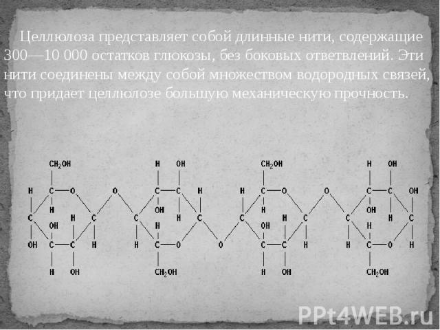 Целлюлоза представляет собой длинные нити, содержащие 300—10 000 остатков глюкозы, без боковых ответвлений. Эти нити соединены между собой множеством водородных связей, что придает целлюлозе большую механическую прочность. Целлюлоза представляет соб…