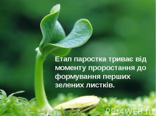 Етап паростка триває від моменту проростання до формування перших зелених листкі