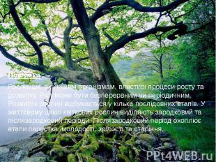 Підсумки Рослинам, як і іншим організмам, властиві процеси росту та розвитку. Рі