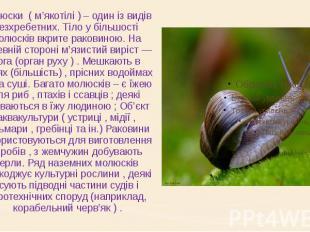 Молюски ( м'якотілі ) – один із видів безхребетних. Тіло у більшості молюс