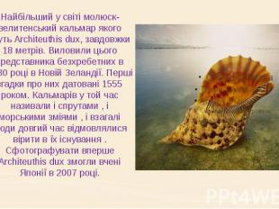 Найбільший у світі молюск- велитенський кальмар якого звуть Architeuthis dux, за