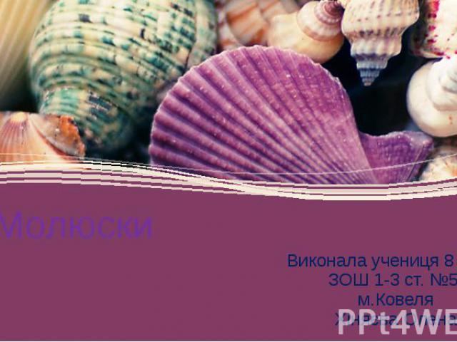Молюски Виконала учениця 8 класу ЗОШ 1-3 ст. №5 м.Ковеля Хіняєва Олена