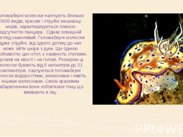 Голожаберні молюски налічують близько 3000 видів, красиві і отруйні мешканці морів, характеризуються повною відсутністю панцира . Однак зовнішній вигляд оманливий. Голожаберні молюски дуже отруйні, від одного дотику до них може зійти шкіра з руки. Щ…