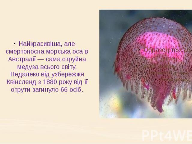Найкрасивіша, але смертоносна морська оса в Австралії — сама отруйна медуза всього світу. Недалеко від узбережжя Квінсленд з 1880 року від її отрути загинуло 66 осіб.
