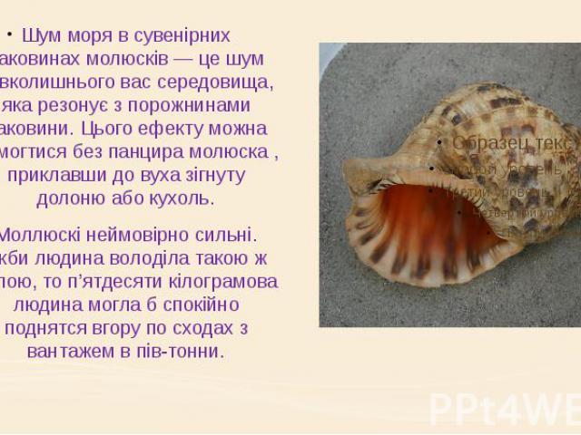 Шум моря в сувенірних раковинах молюсків — це шум навколишнього вас середовища, яка резонує з порожнинами раковини. Цього ефекту можна домогтися без панцира молюска , приклавши до вуха зігнуту долоню або кухоль. Моллюскі неймовірно сильні. Якби люди…