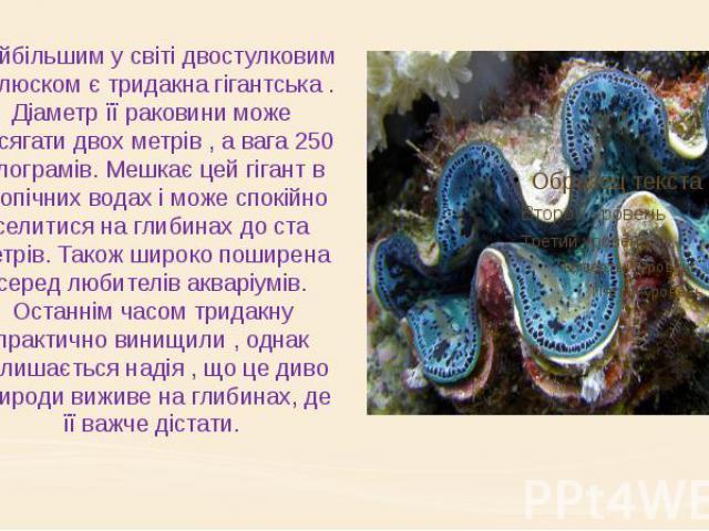 Найбільшим у світі двостулковим молюском є тридакна гігантська . Діаметр її раковини може досягати двох метрів , а вага 250 кілограмів. Мешкає цей гігант в тропічних водах і може спокійно селитися на глибинах до ста метрів. Також широко поширена сер…