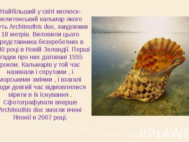 Найбільший у світі молюск- велитенський кальмар якого звуть Architeuthis dux, завдовжки 18 метрів. Виловили цього представника безхребетних в 1880 році в Новій Зеландії. Перші згадки про них датовані 1555 роком. Кальмарів у той час називали і спрута…