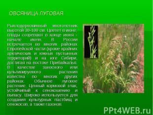 ОВСЯНИЦА ЛУГОВАЯ Рыхлодерновинный многолетник высотой 30-100 см. Цветет в июне,