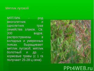 Мятлик луговой МЯТЛИК - род многолетних и однолетних трав семейства злаков. Св.