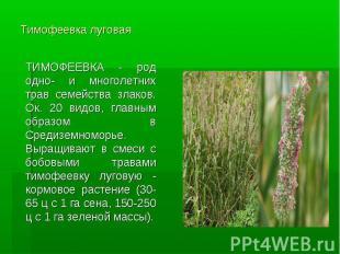 Тимофеевка луговая ТИМОФЕЕВКА - род одно- и многолетних трав семейства злаков. О