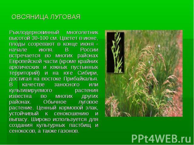 ОВСЯНИЦА ЛУГОВАЯ Рыхлодерновинный многолетник высотой 30-100 см. Цветет в июне, плоды созревают в конце июня - начале июля. В России встречается во многих районах Европейской части (кроме крайних арктических и южных пустынных территорий) и на юге Си…