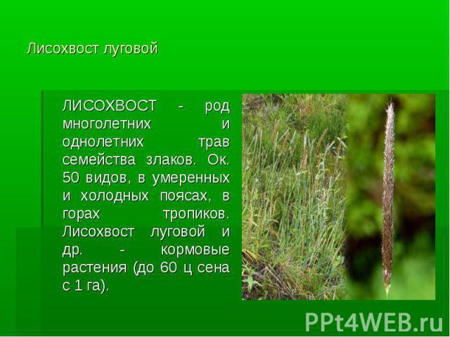 Лисохвост луговой ЛИСОХВОСТ - род многолетних и однолетних трав семейства злаков. Ок. 50 видов, в умеренных и холодных поясах, в горах тропиков. Лисохвост луговой и др. - кормовые растения (до 60 ц сена с 1 га).