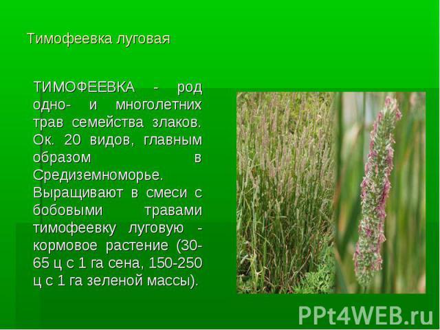 Тимофеевка луговая ТИМОФЕЕВКА - род одно- и многолетних трав семейства злаков. Ок. 20 видов, главным образом в Средиземноморье. Выращивают в смеси с бобовыми травами тимофеевку луговую - кормовое растение (30-65 ц с 1 га сена, 150-250 ц с 1 га зелен…