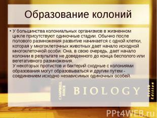 Образование колоний У большинства колониальных организмов вжизненном цикле