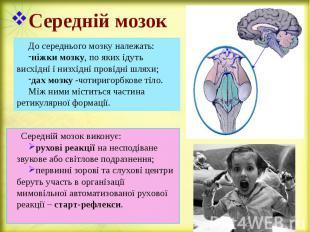 Середній мозок До середнього мозку належать: ніжки мозку, по яких ідуть висхідні
