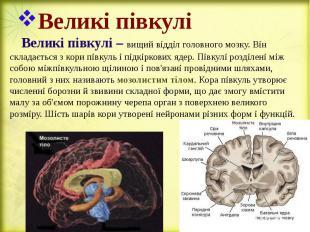 Великі півкулі Великі півкулі – вищий відділ головного мозку. Він складається з