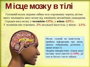Місце мозку в тілі Головний мозок людини займає всю порожнину черепа, кістки яко