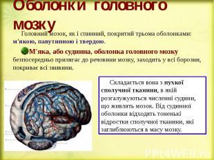 Оболонки головного мозку Головний мозок, як і спинний, покритий трьома оболонкам