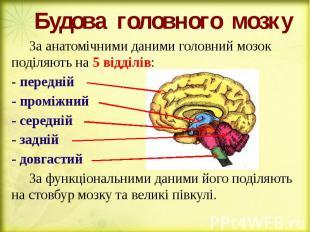 Будова головного мозку За анатомічними даними головний мозок поділяють на 5 відд