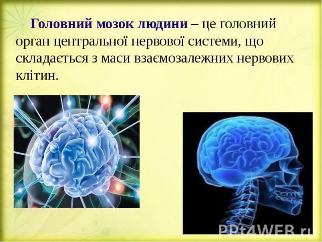 Головний мозок людини – це головний орган центральної нервової системи, що складається з маси взаємозалежних нервових клітин. Головний мозок людини – це головний орган центральної нервової системи, що складається з маси взаємозалежних нервових клітин.