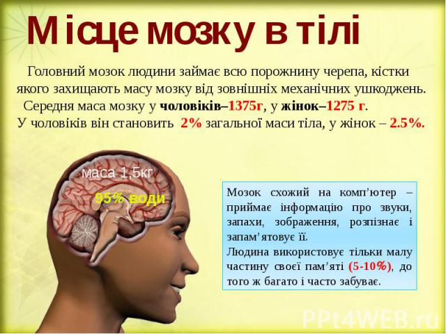 Місце мозку в тілі Головний мозок людини займає всю порожнину черепа, кістки якого захищають масу мозку від зовнішніх механічних ушкоджень. Середня маса мозку у чоловіків–1375г, у жінок–1275 г. У чоловіків він становить 2% загальної маси тіла, у жін…