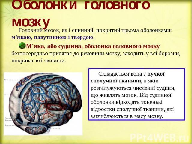 Оболонки головного мозку Головний мозок, як і спинний, покритий трьома оболонками: м'якою, павутинною і твердою. М'яка, або судинна, оболонка головного мозку безпосередньо прилягає до речовини мозку, заходить у всі борозни, покриває всі звивини.