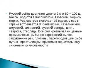 Русский осётр достигает длины 2 м и 80 – 100 ц. массы, водится в Каспийском, Азо