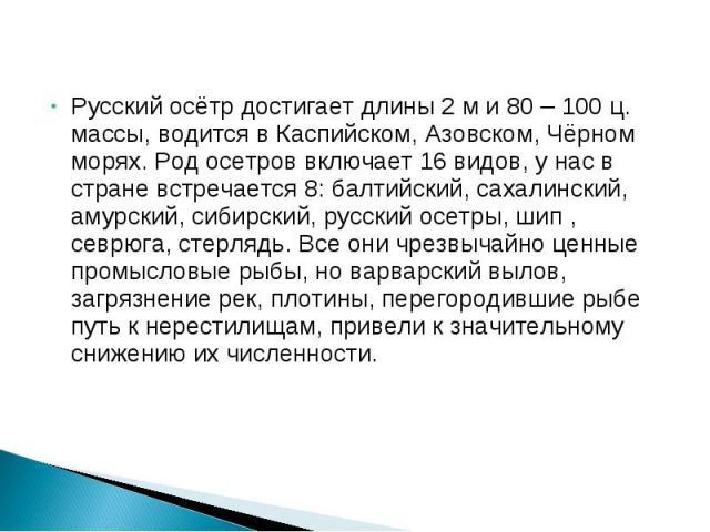 Русский осётр достигает длины 2 м и 80 – 100 ц. массы, водится в Каспийском, Азовском, Чёрном морях. Род осетров включает 16 видов, у нас в стране встречается 8: балтийский, сахалинский, амурский, сибирский, русский осетры, шип , севрюга, стерлядь. …