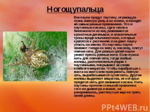 Все пауки прядут паутину, играющую очень важную роль в их жизни, и находят ей са