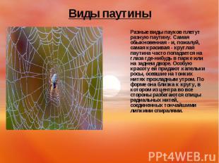 Разные виды пауков плетут разную паутину. Самая обыкновенная - и, пожалуй, самая