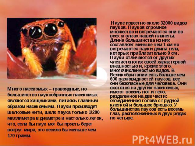 Науке известно около 32000 видов пауков. Пауков огромное множество и встречаются они во всех уголках нашей планеты. Длина большинства из них составляет меньше чем 1 см но встречаются пауки длина тела, которых приблизительно 9 см . Пауки отличаются о…