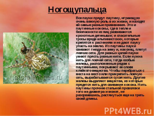 Все пауки прядут паутину, играющую очень важную роль в их жизни, и находят ей самые разные применения. Это и паутинные коконы, где в тепле и безопасности из яиц развиваются крохотные детеныши; и спасательные тросы вроде альпинистских, которые крепят…