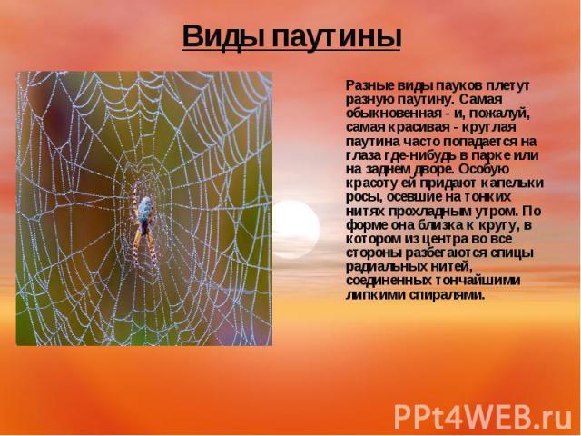 Разные виды пауков плетут разную паутину. Самая обыкновенная - и, пожалуй, самая красивая - круглая паутина часто попадается на глаза где-нибудь в парке или на заднем дворе. Особую красоту ей придают капельки росы, осевшие на тонких нитях прохладным…
