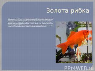 Золота рибка Це була одна з перших домашніх риб і є одною з найпопулярніших аква