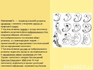 Онтогене з— індивідуальний розвитокорганізмуз моменту ут