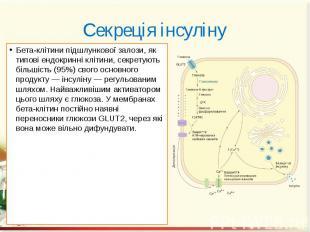 Секреція інсуліну Бета-клітини підшлункової залози, як типові ендокринні клітини