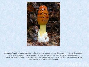 Цезарский гриб (старое название «болетус») впервые описал Джованни Антонио Скопо