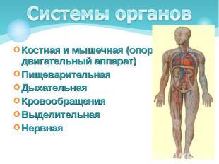 Костная и мышечная (опорно-двигательный аппарат) Костная и мышечная (опорно-двиг