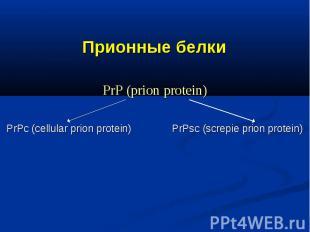 Прионные белки PrP (prion protein) PrPс (cellular prion protein) PrPsc (screpie