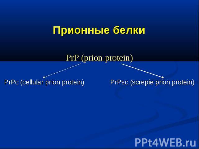 Прионные белки PrP (prion protein) PrPс (cellular prion protein) PrPsc (screpie prion protein)