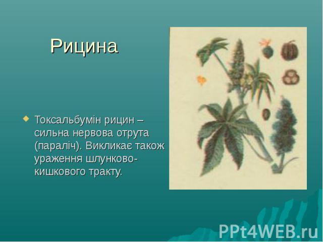 Рицина Токсальбумін рицин – сильна нервова отрута (параліч). Викликає також ураження шлунково-кишкового тракту.