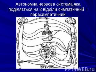 Автономна нервова система,яка поділяється на 2 відділи симпатичний і парасимпати