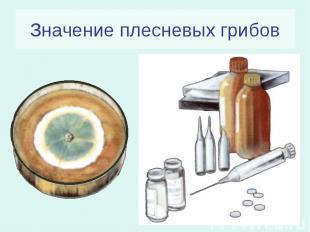 Значение плесневых грибов
