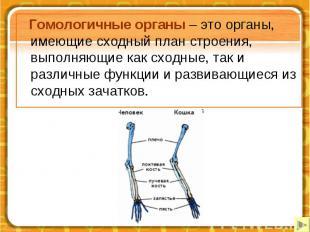 Гомологичные органы – это органы, имеющие сходный план строения, выполняющие как