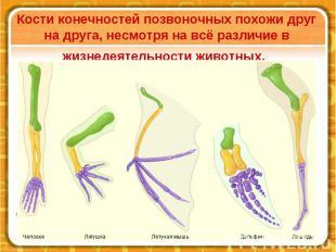 Кости конечностей позвоночных похожи друг на друга, несмотря на всё различие в ж