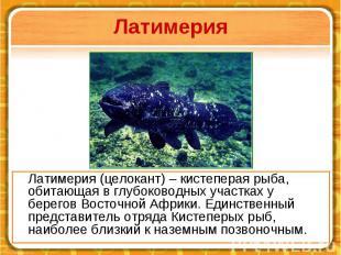 Латимерия Латимерия (целокант) – кистеперая рыба, обитающая в глубоководных учас