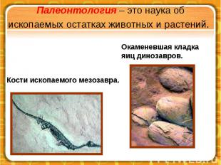Палеонтология – это наука об ископаемых остатках животных и растений.