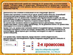 У всех представителей семейства гоминид по 24 хромосомы, за исключением людей, у